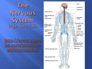 The Nervous System (Pgs. 184-196) http://www.youtube.com/watch?v=a0PNHAwHVnU