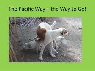 The Pacific Way – the Way to Go!
