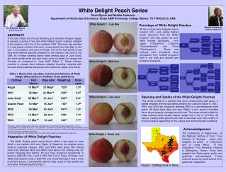 White Delight Peach Series David Byrne and Natalie Anderson