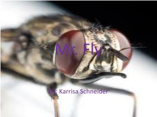 Mr. Fly