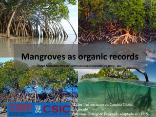 Mangroves as organic records