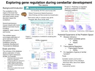 Exploring gene regulation during cerebellar development