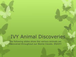 IVY Animal Discoveries