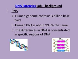 DNA Forensics  Lab – background DNA 	A. Human genome contains 3 billion base 	pairs