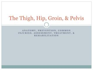 The Thigh, Hip, Groin, & Pelvis