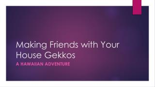 Making Friends with Your House  Gekkos