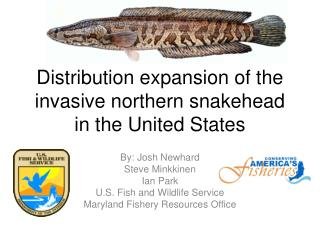 Distribution expansion of the  invasive northern snakehead  in  the United States