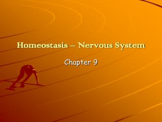 Homeostasis – Nervous System