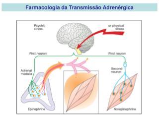 Farmacologia da Transmiss o Adren rgica