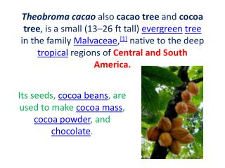 Its seeds,  cocoa beans , are used to make  cocoa mass ,  cocoa powder , and  chocolate .