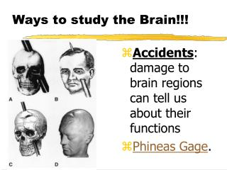 Ways to study the Brain!!!