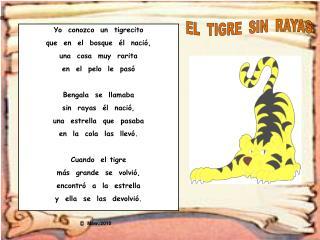 Yo  conozco  un  tigrecito que  en  el  bosque  él  nació, una  cosa  muy  rarita