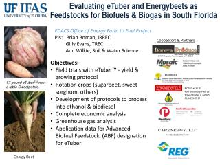 Evaluating eTuber and Energybeets as  Feedstocks for Biofuels  &  Biogas in South Florida