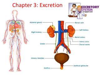 Chapter 3: Excretion