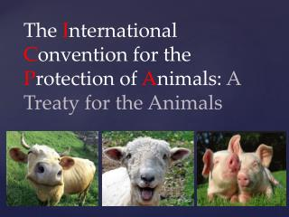 The  I nternational  C onvention for the  P rotection of  A nimals:  A Treaty for the Animals