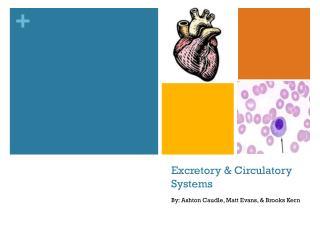 Excretory & Circulatory Systems