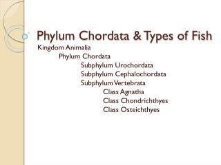 Phylum  Chordata  & Types of Fish