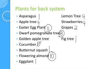 Plants for back system