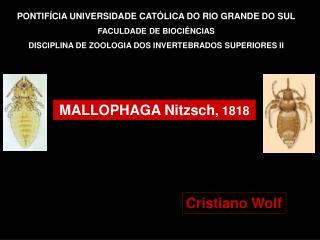 PONTIF CIA UNIVERSIDADE CAT LICA DO RIO GRANDE DO SUL FACULDADE DE BIOCI NCIAS   DISCIPLINA DE ZOOLOGIA DOS INVERTEBRADO