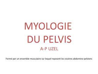 MYOLOGIE  DU  PELVIS A-P UZEL
