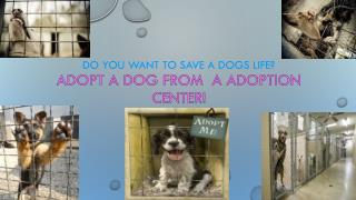 do you want to save a dogs life? Adopt A Dog From  A Adoption Center!