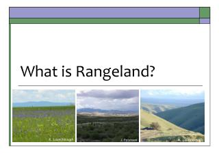 What is Rangeland?