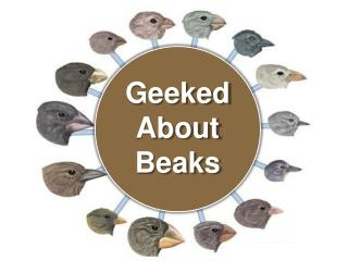 Geeked  About Beaks