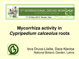 Mycorrhiza  activity in  Cypripedium  calceolus  roots