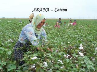 ADANA –  Cotton