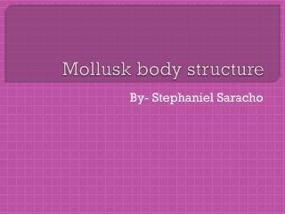 Mollusk body structure