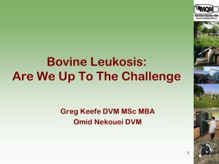 Bovine  Leukosis :   Are We Up To The Challenge