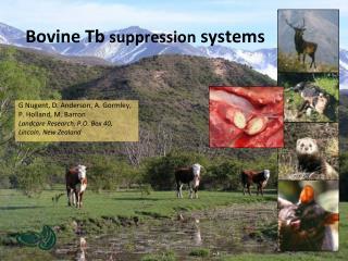 Bovine Tb  suppression  systems