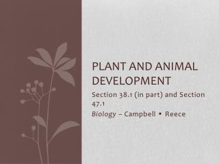 Plant and animal development