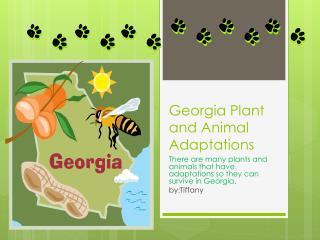 Georgia Plant and Animal Adaptations
