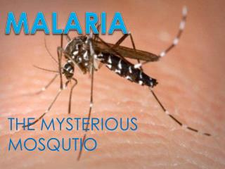 THE MYSTERIOUS MOSQUTIO