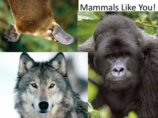 Mammals Like You!
