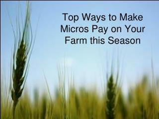 Top Ways to Make Micros Pay on Your Farm this Season