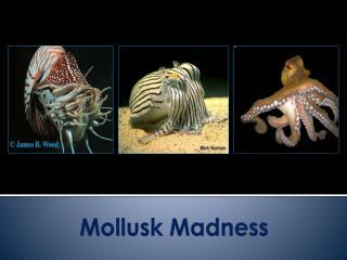 Mollusk Madness