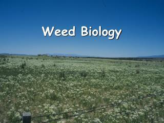 Weed Biology