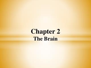 Chapter 2 The Brain