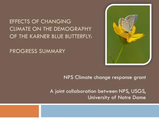 Effects of changing  climate on the demography  of the  Karner  blue butterfly: Progress summary