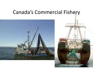 Canada's Commercial Fishery