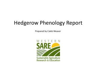 Hedgerow Phenology Report