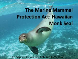 The Marine Mammal Protection Act: Hawaiian Monk Seal