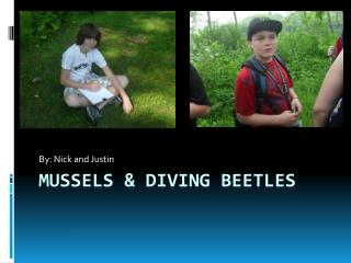 Mussels & Diving Beetles