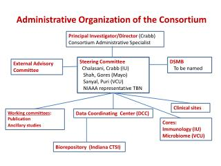 Administrative Organization of the Consortium