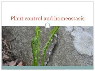 Plant control and homeostasis