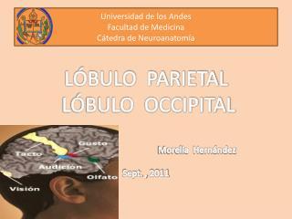 Universidad de los Andes Facultad de Medicina Cátedra de Neuroanatomía