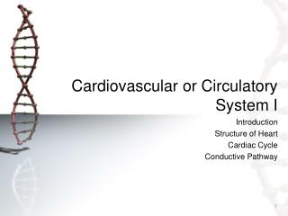 Cardiovascular or Circulatory System I