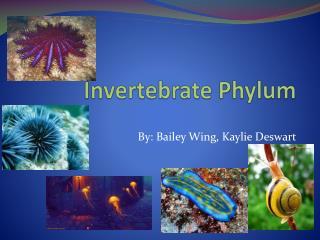 Invertebrate Phylum